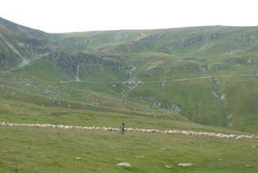 Wypas owiec w Karpatach rumińskich